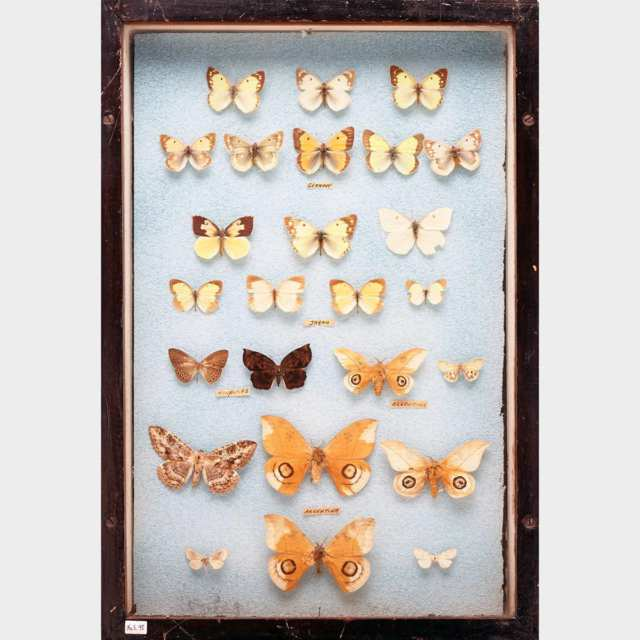 Six Victorian Lepidopterological Cases
