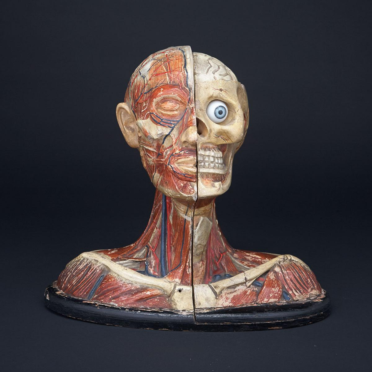 French Polychromed Papier Maché, Glass and Wood Head and Shoulders Anatomical Study Ecorche, early 20th century