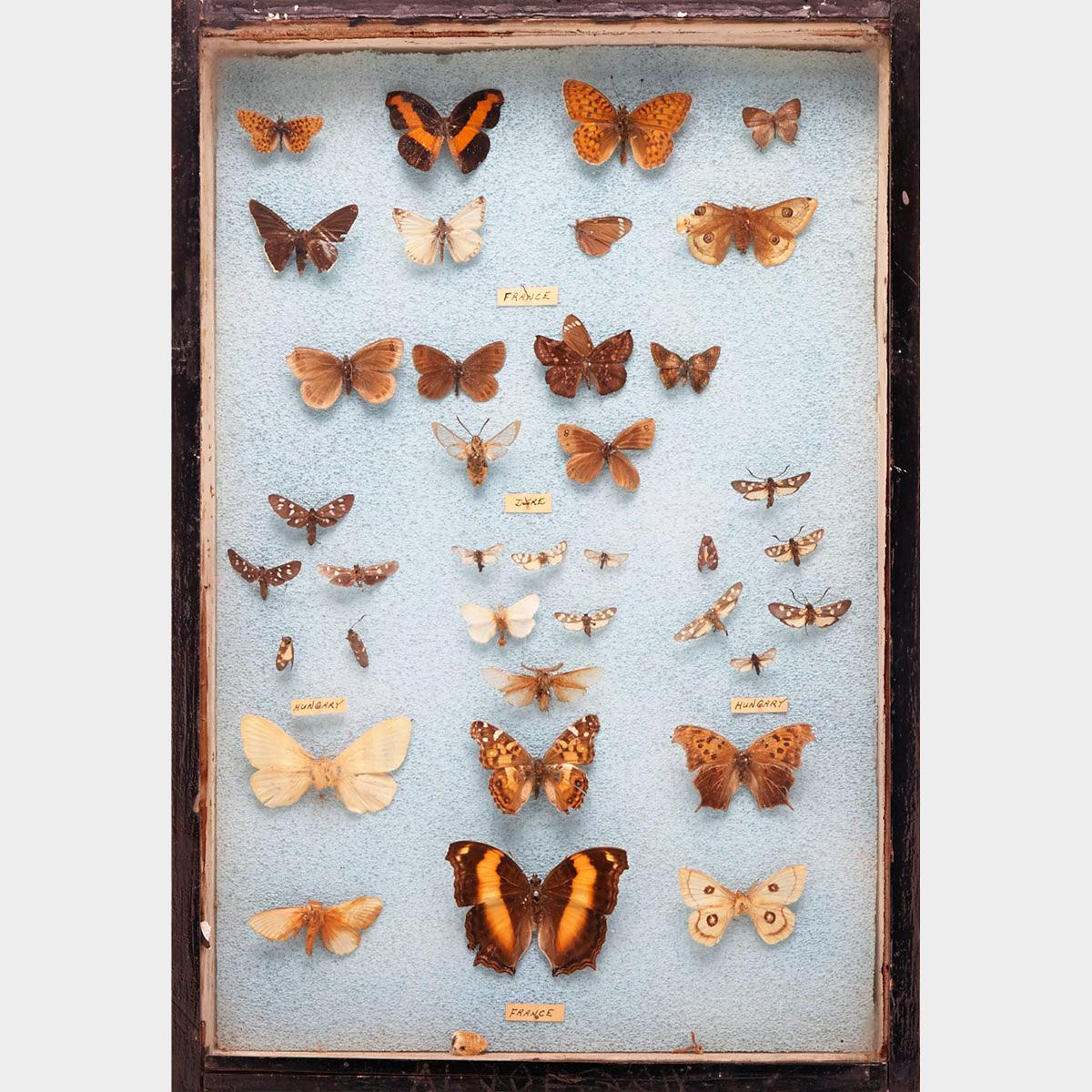 Six Victorian Lepidopterological Cases, 19th century