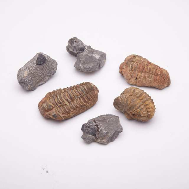 Group of Six Trilobite Fossils, Ordovician and Devonian Eras