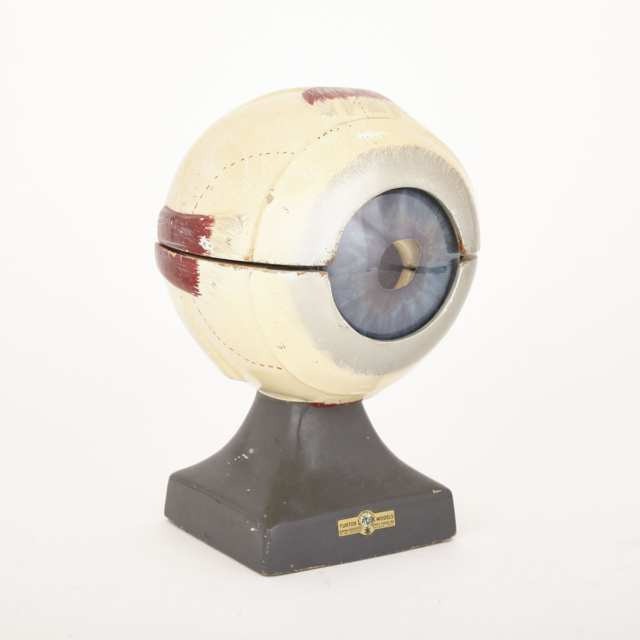 Anatomical Study Model of an Eye by Turtox Latex Models, mid 20th century